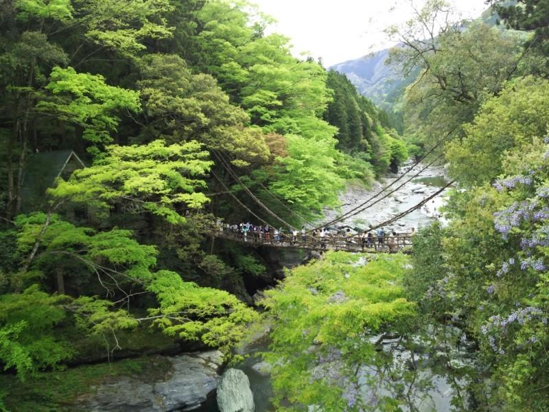 祖谷のかずら橋 in 徳島県三好市